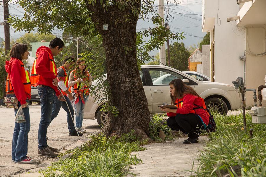 Comenzamos a registrar desde 2013 el patrimonio arbóreo en DistritoTec en la plataforma Bosque Urbano México.